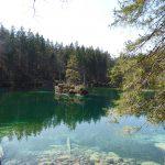 Smaragdfarbenes Waldauge